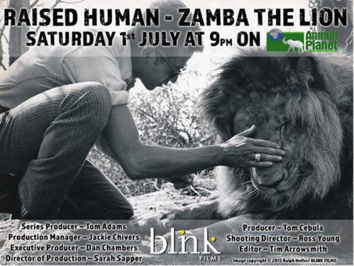 Animal Planet - Raised Human - Zamba The Lion